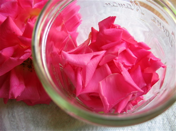 rose-petals-for-gulkand.jpg