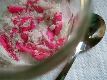 sugar-and-rose.jpg