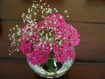 achillea-flowers.jpg