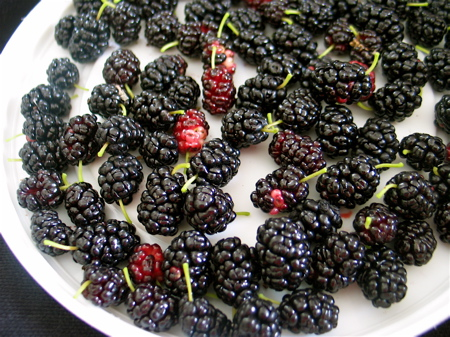 [Image: mulberries-on-a-plate.jpg]